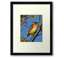 Beauty on a branch Framed Print