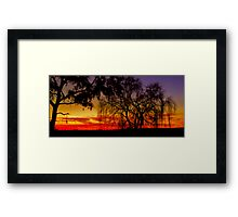 Gum and Willow Framed Print