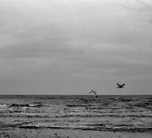 sea birds by lsmelancholy