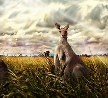 3 kangaroos by Cliff Vestergaard