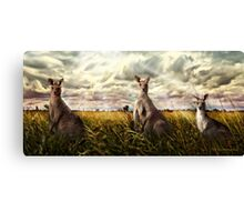3 kangaroos Canvas Print