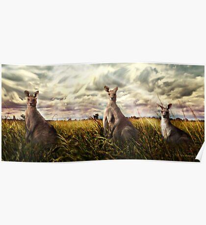 3 kangaroos Poster