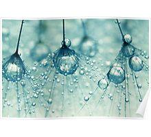 Sparkling Dandy Drops Poster