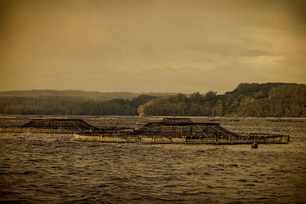 Fish Farms, Gordon River, Tasmania by Elaine Teague