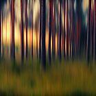 Chorus of trees by pawelmatys