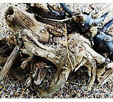 Lake Shore Curiosities Photographic Print