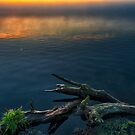 a little bit... by THHoang