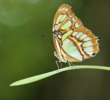 Butterfly Soliloquy by Olivia Moore