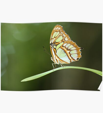 Butterfly Soliloquy Poster