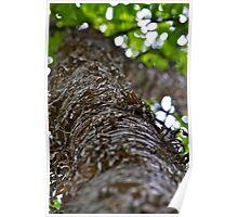 Yellow Birch bark Poster