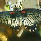 Painted Wings by Lorelle Gromus