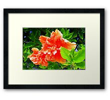 Bright hibiscus bough Framed Print