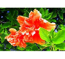 Bright hibiscus bough Photographic Print
