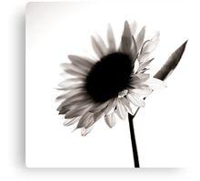 Sunflowers BW Canvas Print