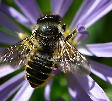 Busy Bee by Tracy Deptuck