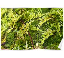 Broom and Sphagnum Moss Poster