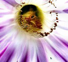 hello purple sunshine by CP-photography