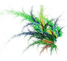 Bright Fronds Fractal Photographic Print