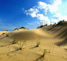 Sand Dunes, North Carolina by Alberto  DeJesus
