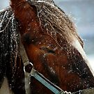 Snow Storm by mpstone