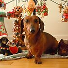 Christmas Dachshund (Version 1) by DebiCady