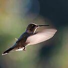 Humming Bird In Flight by Annie Underwood