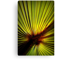 Palm Green With Sunshine In Canvas Print