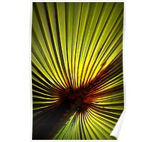 Palm Green With Sunshine In Poster