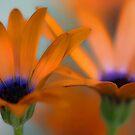 Orange Symphony by T.J. Martin