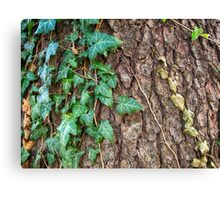 Bark and Ivy Canvas Print