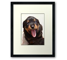 Cute Rottweiler Puppy With Tongue Out Framed Print