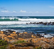 Wind, Waves and Rocks by Roger Neal