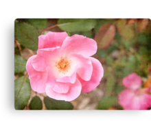 Pink Textured Rose Canvas Print
