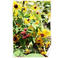 Sunflower Berries Poster