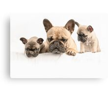 Frenchie Family Canvas Print