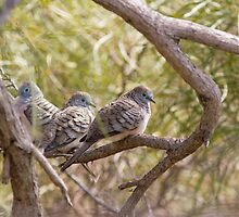 Peaceful Doves by mncphotography