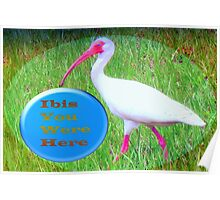 Ibis with a Wish Poster