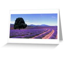 Lavander Greeting Card
