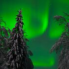 Aurora Borealis by Christopher Martin