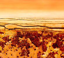 Desert Solitude by Kathie Nichols