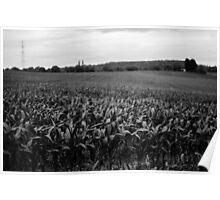 Crop Field Poster