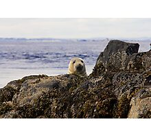 Welcome to the Farne Islands Photographic Print