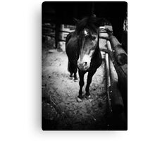 Sad Pony Canvas Print