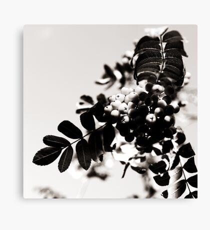 Rowanberries in monochrome Canvas Print