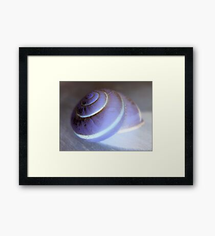 Blue Snail Framed Print