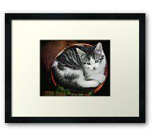 Kitten in a Flower Pot Framed Print