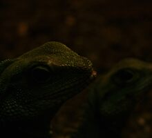 The tale of two Reptiles by Jeroen van Ommen