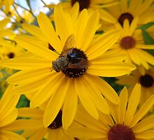 Bee on a Flower by Brian Schell