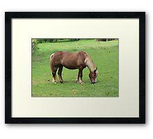 Beautiful Horse - watch video! Framed Print