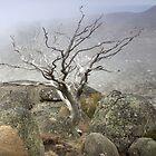 Rock and Mist by Bruce Reardon